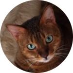 Nanju_Profil