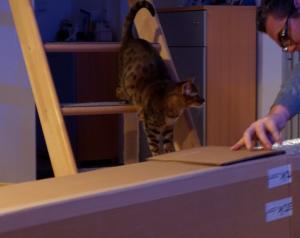 Katzen_und_Kisten