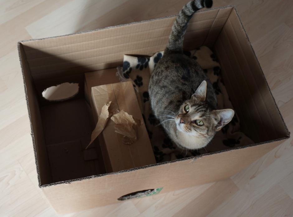 Katzenblog_Katze_in_Kiste