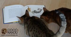 Katzenblog_Katzen_Zweibeiner