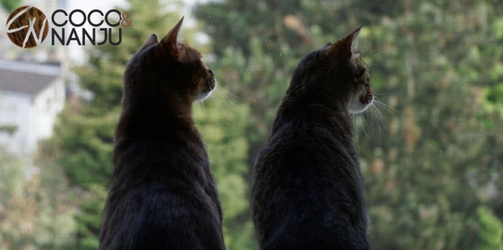 Katzenblog_Katzenfernsehen