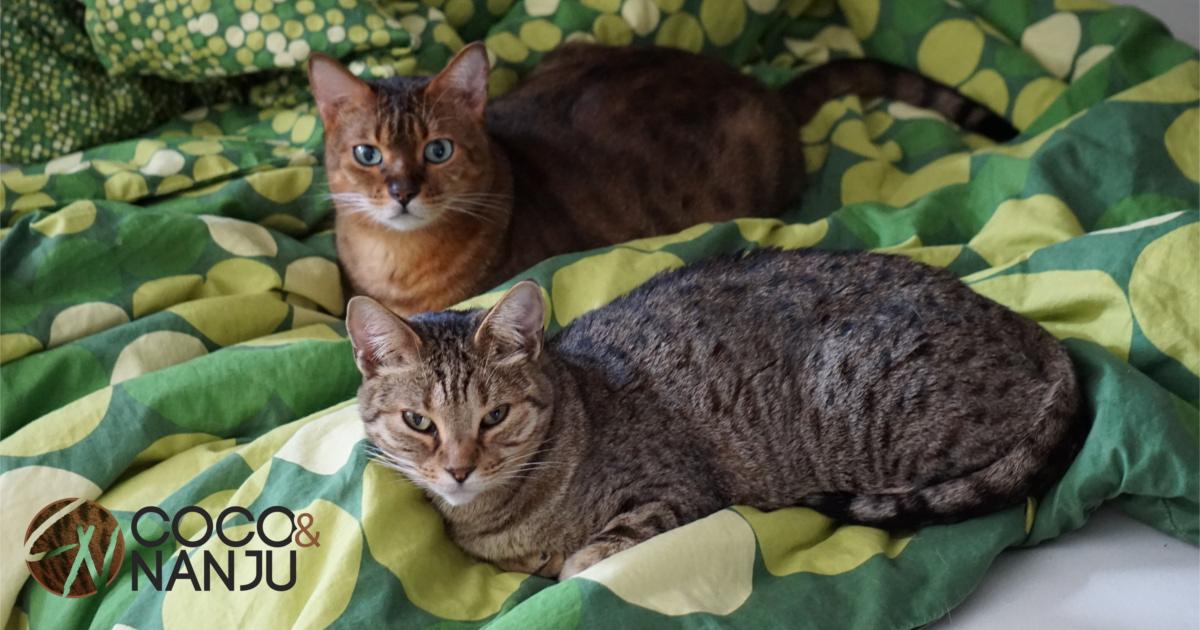 Katze im Bett - ja oder nein? - Coco und Nanju