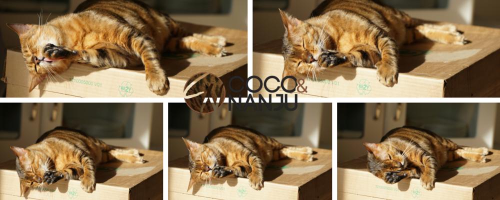 Katzenblog_Fotokurs_6