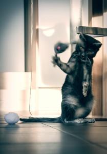 Katzenfotos_Wettbewerb_Greta2