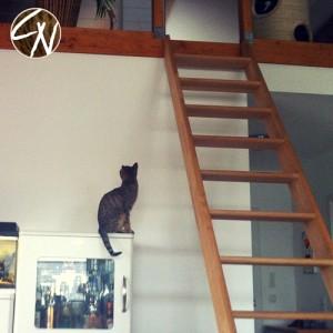 Katze_hat_Angst_3