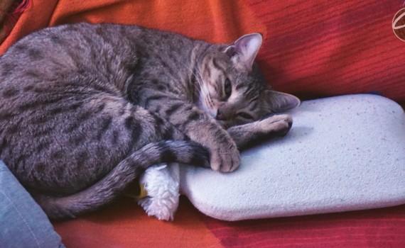 Katze_krank