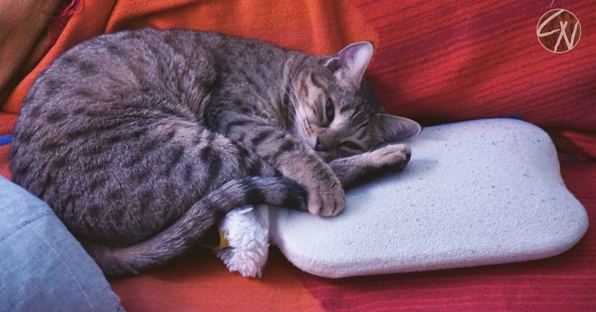 Rachenentzündung Katze