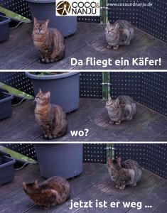 Katzen_beobachten_Insekten