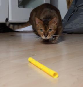 Kitty_Boinks_Katzenspielzeug3