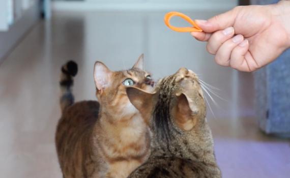 Kitty_Boinks_Katzenspielzeug4