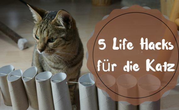 Katzenspielzeug_Klopapierrollen_basteln