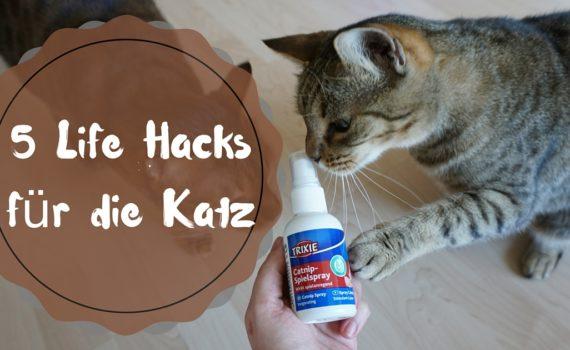 Katzenminze-Hacks