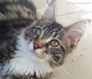 Mycooniecats -Mina